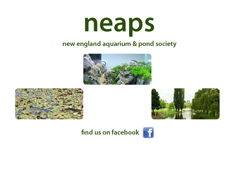 neaps - new england aquarium and pond society